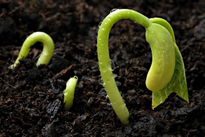 seed_germinating