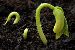 seed_germinating